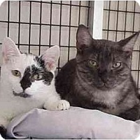Adopt A Pet :: Zoomer & Chelsea - Deerfield Beach, FL