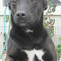Adopt A Pet :: Pi - Oakley, CA