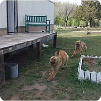 Adopt A Pet :: Lulu and Lobo - Chimayo, NM