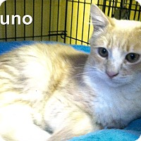 Adopt A Pet :: Bruno - Medway, MA