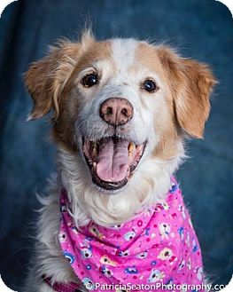 Border Collie/Spaniel (Unknown Type) Mix Dog for adoption in Peterborough, Ontario - Nikki