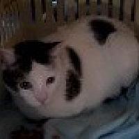 Adopt A Pet :: Big Baby - Sac/Auburn, CA