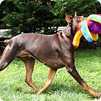 Adopt A Pet :: ROSEANNE - Greensboro, NC