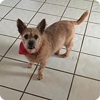 Adopt A Pet :: Tucker - Davie, FL