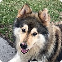 Adopt A Pet :: MEIKO - Adoption Pending - Boise, ID