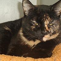 Adopt A Pet :: Kassie - Ruidoso, NM
