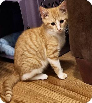 orange kitten blues clues