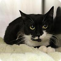 Adopt A Pet :: Felix 35502376 - Westampton, NJ