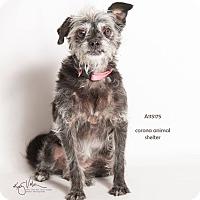 Adopt A Pet :: KENNEL 46 - Corona, CA
