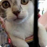 Adopt A Pet :: Sylvia Earl - Greensboro, NC