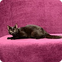 Adopt A Pet :: Will - Cary, NC