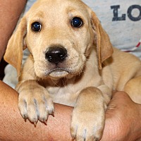 Adopt A Pet :: Meg - Southbury, CT