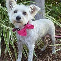 Adopt A Pet :: Betsy BB - Seattle, WA