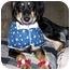 Photo 2 - Saluki/Collie Mix Dog for adoption in Evansville, Indiana - Hadrian