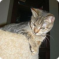 Adopt A Pet :: Carya - Apex, NC