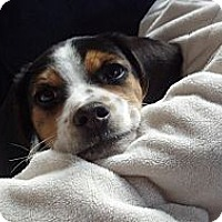 Adopt A Pet :: Karma - kennebunkport, ME