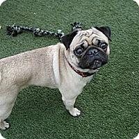 Adopt A Pet :: Rosco - Avondale, PA