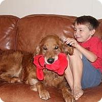 Adopt A Pet :: Riley - Foster, RI