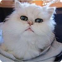 Adopt A Pet :: Ping - Beverly Hills, CA