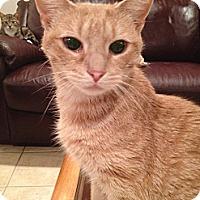 Adopt A Pet :: Arizona - East Hanover, NJ