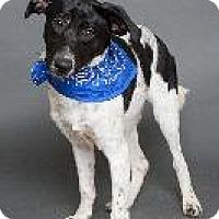 Adopt A Pet :: Campbell - Louisville, KY