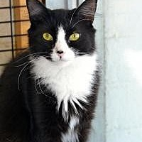 Adopt A Pet :: Pixie - Wellesley, MA