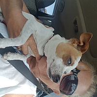 Chihuahua Dog for adoption in Palm Bay, Florida - Casper