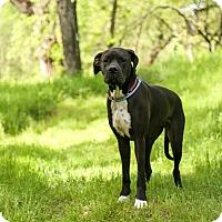 Adopt A Pet :: Freedom - Auburn, CA