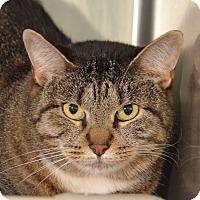 Adopt A Pet :: 10310867 FLUFF - Brooksville, FL