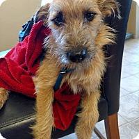 Adopt A Pet :: Peanut Schultz - Alpharetta, GA
