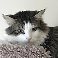 Adopt A Pet :: Stitch - Romeoville, IL