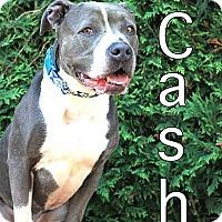 Adopt A Pet :: Cash - Fall River, MA