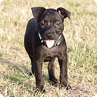 Adopt A Pet :: Ella - oklahoma city, OK