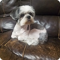 Adopt A Pet :: Heidi Montgomery - Urbana, OH