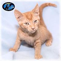 Adopt A Pet :: Leonardo DiCatrio - Howell, MI