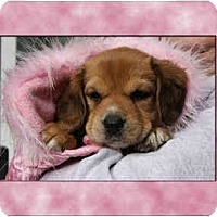 Adopt A Pet :: Sydney Earlene - Portland, OR