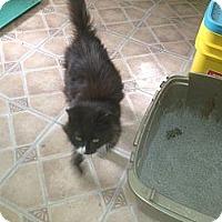 Adopt A Pet :: Lily - Tarboro, NC
