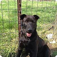 Adopt A Pet :: Fantasy - Linton, IN
