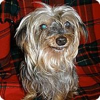 Adopt A Pet :: Toto - Cantonment, FL
