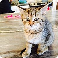 Adopt A Pet :: Hally - Edmonton, AB