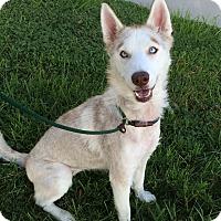 Adopt A Pet :: Vail - Mission Viejo, CA