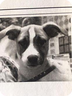 Mixed Breed (Medium) Mix Puppy for adoption in Warner Robins, Georgia - Esma