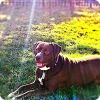 Adopt A Pet :: Amelia - Dayton, OH
