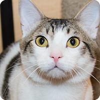 Adopt A Pet :: Abazaba - Irvine, CA