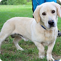 Adopt A Pet :: Coop the Man~adopted! - Glastonbury, CT