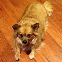 Adopt A Pet :: Coco - Alden, NY