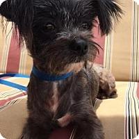 Adopt A Pet :: Buffy W - Santa Fe, TX