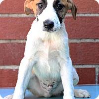 Adopt A Pet :: Davey - Waldorf, MD