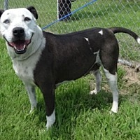Adopt A Pet :: Belle - Olive Branch, MS