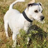 Adopt A Pet :: Sparky - Central Point, OR